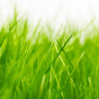 Natural green background with selective focus — Stock Photo #24912521