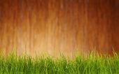 Fundo de ferramentas de jardim outono — Foto Stock