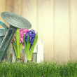 Gardening background — Stock Photo