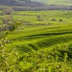Tuscany hills — Stock Photo #25233959