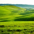 Countryside, San Quirico d'Orcia , Tuscany, Italy — Stock Photo #25380559