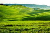 Campo, san quirico d'orcia, toscana, italia — Foto de Stock
