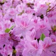 Flower blossoms over blurred nature background.Spring Backgroun - Stock Photo