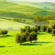 Countryside, San Quirico d'Orcia , Tuscany, Italy - Stock Photo