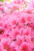 Flower blossoms over blurred nature background.Spring Backgroun — Stock Photo
