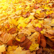 Colorful background of autumn leaves  — Lizenzfreies Foto