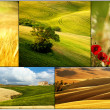 Meadow in spring collage — Stock Photo #26024523