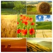 Meadow in spring collage — Stock Photo