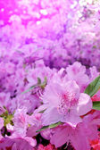 Flowers blooming. Beautiful pink blossom — Stockfoto