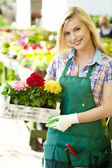 Florists woman working with flowers at a greenhouse. — Stock Photo