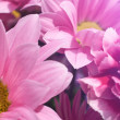 Beautiful spring daisy flowers banner — Stock Photo