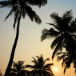 Palms and sun, tropical sunset taken in Goa, India — Stock Photo