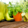 Gardening tools — Stock Photo #26228725