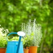 Concept of gardening and hobby - Stock Photo
