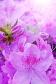 Summer flowers background — Stock Photo