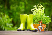 Concept of gardening and hobby — Stock Photo