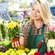 Florists woman working with flowers at a greenhouse. — Stock Photo #26752161