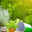 Stock Photo: Concept of gardening and hobby