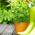 trädgårdsredskap — Stockfoto