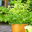 Outdoor gardening tools — 图库照片 #27185643