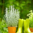 Stock Photo: Gardening tools