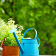 Fresh herbs in wooden box with garden tools on terrace — Stockfoto