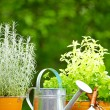 Fresh herbs in wooden box with garden tools on terrace — Stock Photo #27477295