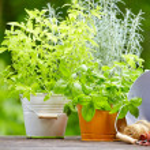 świeże zioła w drewniane pudełko z narzędzia ogrodowe, na taras — Zdjęcie stockowe