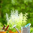 Fresh herbs in wooden box with garden tools on terrace — Stock Photo