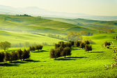 Countryside, San Quirico'Orcia , Tuscany, Italy — Stock Photo