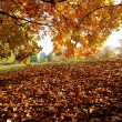 Colorful trees in the autumn park — Stock Photo