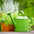 Outdoor gardening tools — Foto de Stock
