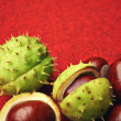 Chestnut with crust on a red background — Stock Photo