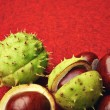 Chestnut with crust on a red background — Stock Photo #32376357