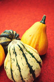 Assorted composition of colorful and decorative mini pumpkins — Stock Photo