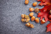 Nuts and berrys autumn background — Stock Photo