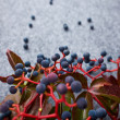 Autumn abstract berrys background — Stock Photo