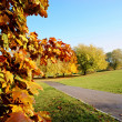 Autumn park — Stockfoto #33316859