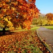 Autumn park — Stock Photo #33316865