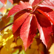 Autumn background, vintage maple leaves  — Stock Photo