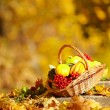 Autumn gardening background  — Stock Photo