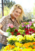 Florists woman — Stock Photo