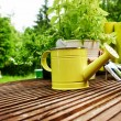 Gardening tools — Stock Photo #38376353