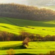 Picturesque Tuscany landscape — Stock Photo #38753481