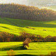 Picturesque Tuscany landscape — Foto Stock #38753481