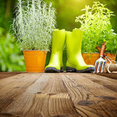 Gardening tools on old wood table — Stock Photo