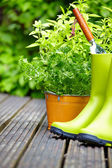 садовые инструменты — Стоковое фото