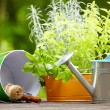 Stock Photo: Gardening and hobby