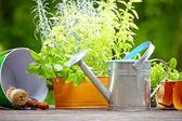 Gardening and hobby — Stock Photo