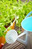Gardening and hobby — Zdjęcie stockowe